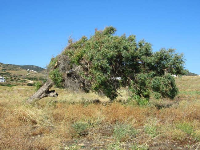 albero-vento