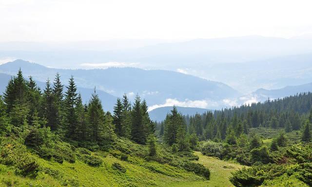 carpazi-foreste-maramures