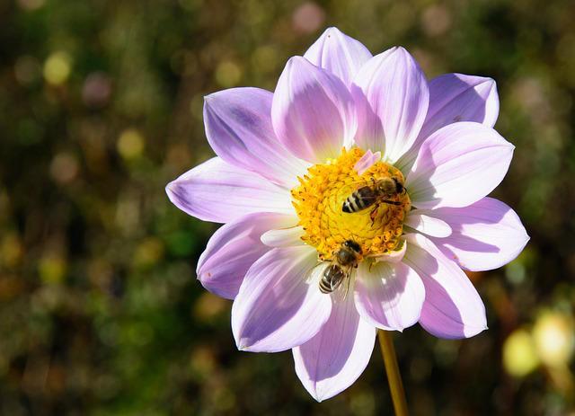fiori-api