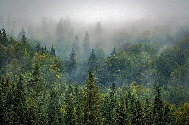 foreste-europa